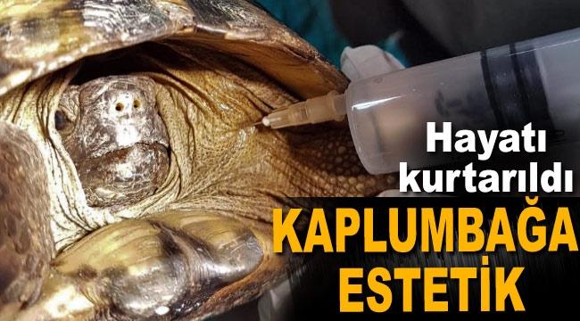 Ezilen kaplumbağaya estetik yapıldı