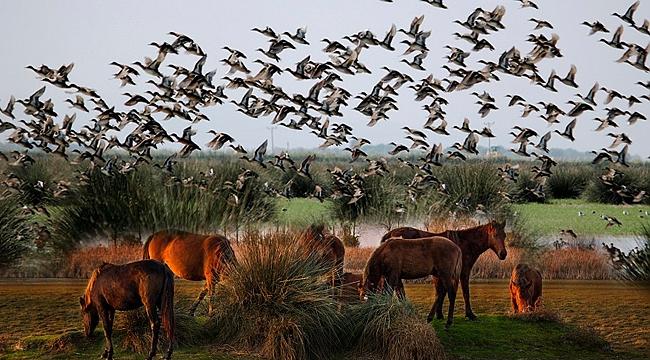 Kızılırmak Deltası Türkiye'nin ilk doğa mirası olacak