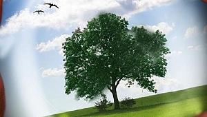 Enerji çevre ve iklim değişikliği durumu