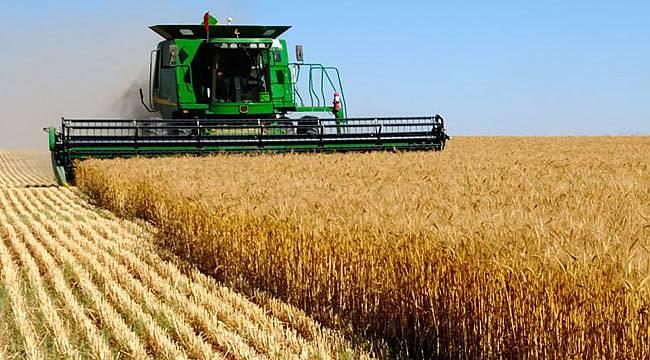 Samsun'da firmalar Rusya'ya Buğday resti