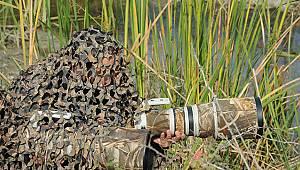Kızılırmak Deltası'nda foto safari
