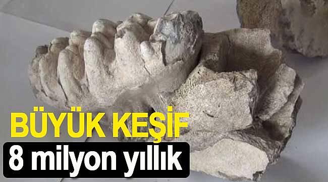 8 milyon yıllık mamut çenesi bulundu