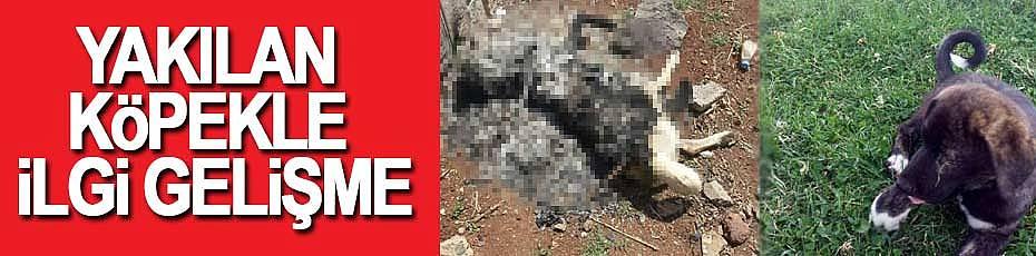 Minik köpeğin yakılmasıyla ilgili savcılık soruşturma başlattı