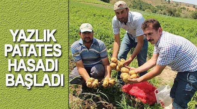 Yaz patateslerinde hasat dönemi
