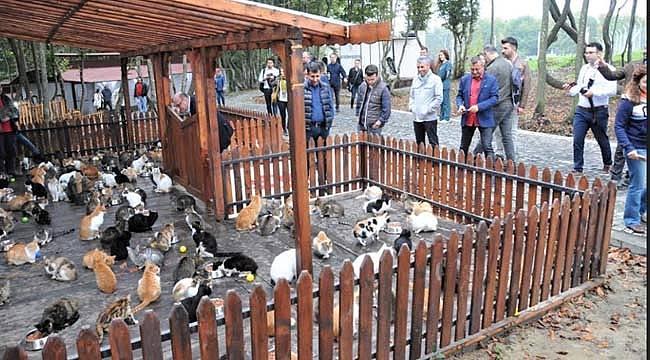 Hayvan barınağına ziyaret