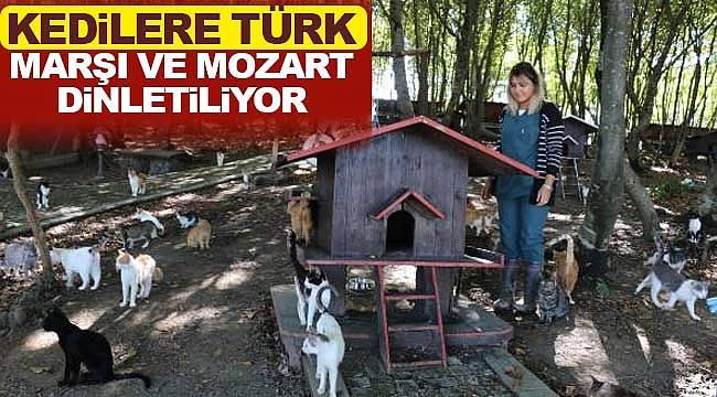Kedilere Türk Marşı ve Mozart dinletiliyor