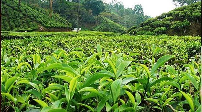 En iyi çay nasıl demlenir çayın tadına nasıl varılır