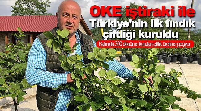 OKE iştiraki ile Türkiye'nin ilk fındık çiftliği